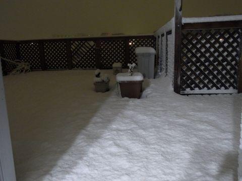 2月14日雪.JPG